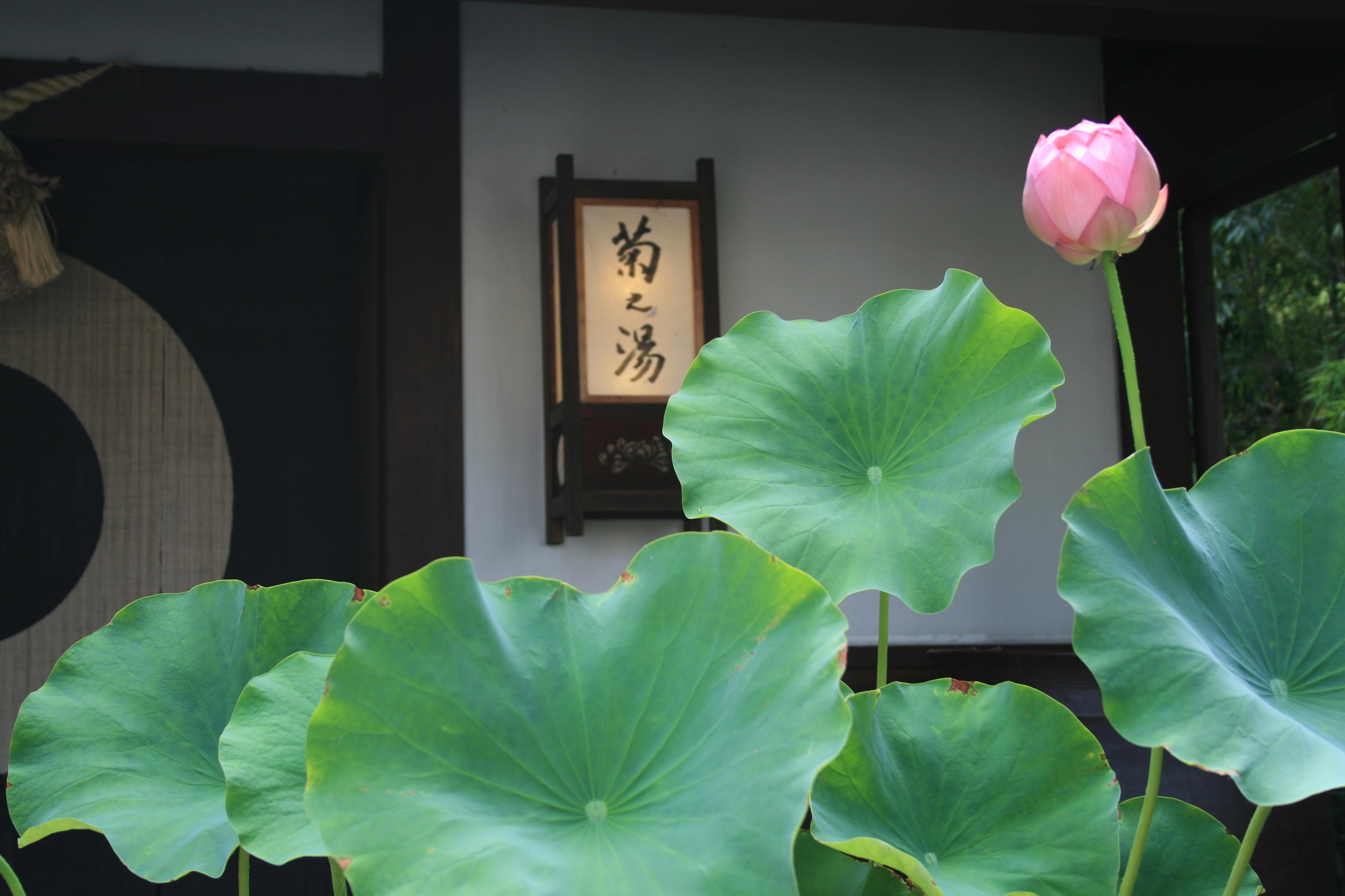 菊之湯玄関 夏