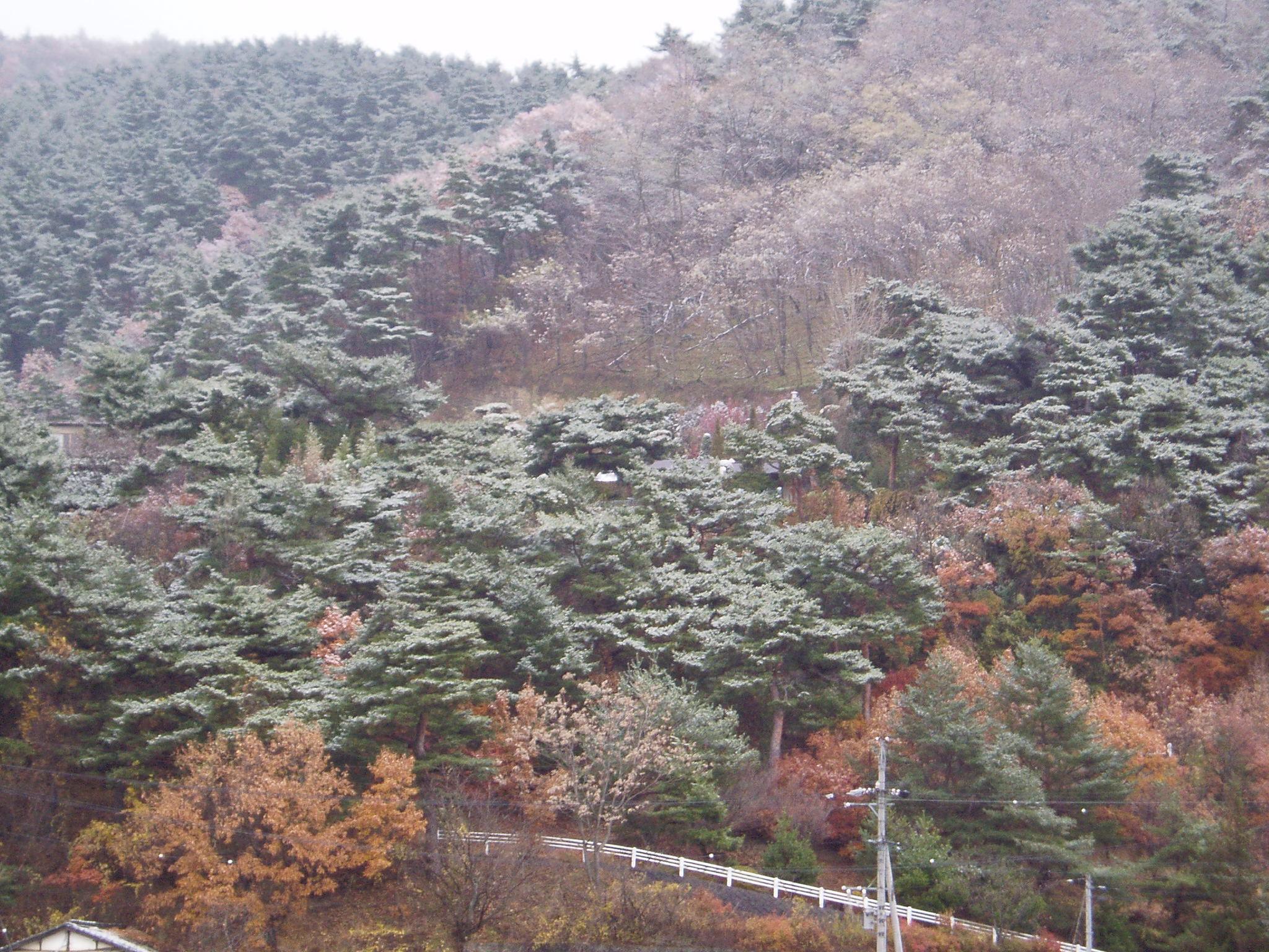 冬の一日 大雪の頃