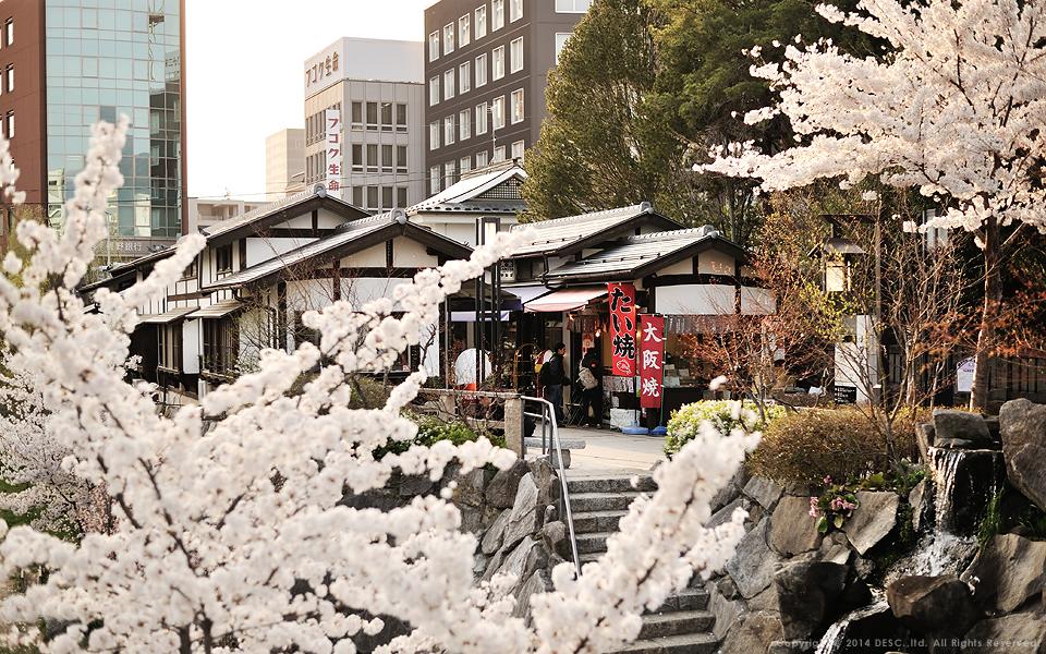 【縄手通り】春のイメージ
